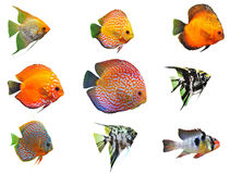 Fishes. Group of fishes on a white background royalty free stock photos