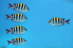 Fishes. Five beutiful fishes under water royalty free stock image