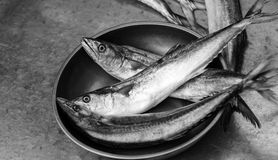 Fishes. For sale at a market Royalty Free Stock Photos