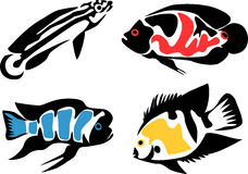 Free Fishes Royalty Free Stock Photography - 30759647