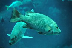 Fishes. In aquarium in kuwait aquarium centre Royalty Free Stock Photography