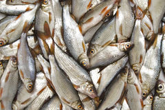 Fishes. Basket of small fishes in the market Stock Image