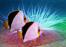 Fishes. Photograph of underwater tropical fishes stock images