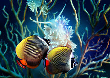 Fishes royalty free stock photos