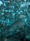 Fishes Royalty Free Stock Photography
