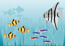 Fishes. Aquarium with color fishes and plants Royalty Free Stock Images