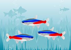 Fishes. Aquarium with color fishes and plants Stock Image