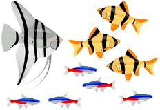 Fishes. Various fishes separated on the white background Royalty Free Stock Image