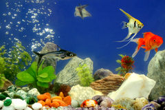 Fishes in the aquarium Stock Photo
