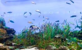 Fishes - Aquarium of Barcelona Royalty Free Stock Photo
