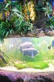 Fishes - Aquarium of Barcelona Stock Photos