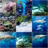 Fishes in aquarium of Barcelona, Spain Stock Photo