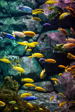 Fishes. Royalty Free Stock Photography
