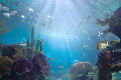 Fishes in aquarium Royalty Free Stock Image