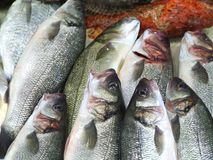 Fishes background. Sea fishes on the market Stock Photo