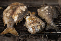 Fishes on bbq Stock Photography