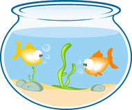 Fishes in the bowl Stock Photos