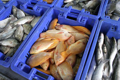 Fishes in cases Stock Images