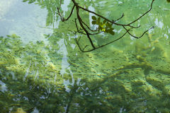 Fishes in clear water Stock Photos
