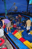 Fishes are collected and sorted into baskets before loading onto the truck at the Hon Ro seaport, Nha Trang city Stock Photography
