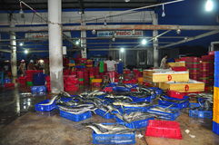 Fishes are collected and sorted into baskets before loading onto the truck at the Hon Ro seaport, Nha Trang city Royalty Free Stock Photos