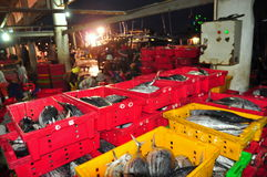 Fishes are collected and sorted into baskets before loading onto the truck at the Hon Ro seaport, Nha Trang city Royalty Free Stock Images