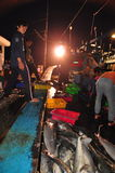 Fishes are collected and sorted into baskets before loading onto the truck at the Hon Ro seaport, Nha Trang city Royalty Free Stock Photo