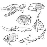Fishes Collection Royalty Free Stock Images