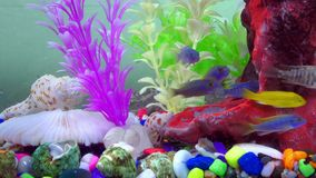 Fishes in Colorful Aquarium in Underwater. 