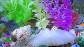 Fishes in colorful aquarium in underwater. Sweet water animal small fishes and colorful stones, imitation fauna flora background in underwater stock video