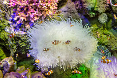 Fishes coral Royalty Free Stock Photos