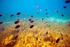 Fishes on coral reef area Stock Image