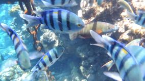 Fishes and coral stock video footage