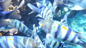 Fishes and coral stock footage
