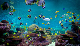 Fishes and coral, underwater life Royalty Free Stock Images