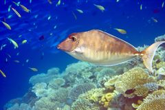 Fishes in corals Stock Photos