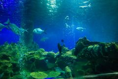 Fishes at Corals Air Bubbles in Oceanarium from Tourist Tube. Different fishes at corals and air bubbles in oceanarium against dark blue background from tourist Royalty Free Stock Image