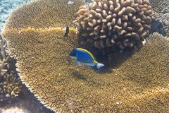 Fishes in corals. Maldives. Underwater landscape Stock Photo