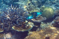 Fishes in corals. Maldives. Underwater landscape Royalty Free Stock Photo