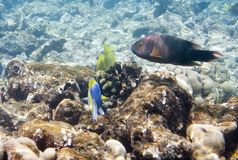 Fishes in corals. Maldives. Indian ocean. Fishes in corals Maldives Indian ocean Royalty Free Stock Photography