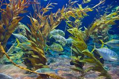 Fishes and corals reef in Aquarium. Nature background Royalty Free Stock Images