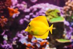 Fishes and corals reef. In aquarium - nature background Royalty Free Stock Photo