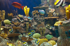 Fishes and corals reef in Aquarium Stock Images