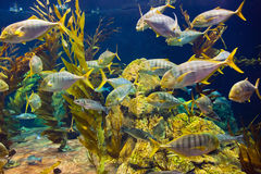 Fishes and corals reef in Aquarium Stock Image