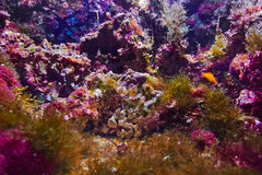 Fishes and corals reef Royalty Free Stock Photography