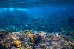 Fishes and corals in tropical seashore underwater photo. Marine diversity. Warm sea nature. Coral diverse sea bottom