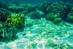 Fishes and corals under water. Banana beach, Coral Koh He island, Thailand. Fishes and corals under water. Banana beach, Coral Koh He island, Phuket, Thailand Royalty Free Stock Photos