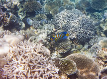 Fishes in corals. Underwater world.  Stock Photo