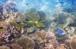 Fishes in corals. Underwater world.  Royalty Free Stock Photography