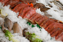 Fishes displayed on ice Stock Photography
